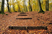 Autumn forest with wooden stairs — Stock Photo