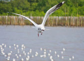 Alone white seagull flying in the sky over the sea — Stock Photo