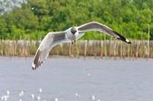 La gaviota blanca volando en el cielo sobre el mar — Foto de Stock