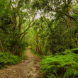 Natures Valley path — Stock Photo