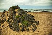 Beach Rock - Natures Valley — Foto Stock