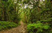 Natures Valley path — Foto Stock
