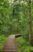 Board walk - Natures Valley — Stock Photo