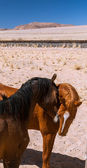 Feral horses — Stock Photo