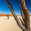 Sossusvlei Deadvlei Namibia — Stock Photo #41031749