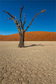 Sossusvlei Deadvlei Namibia — Stock Photo