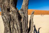 Sossusvlei Deadvlei Namibia — Stock Photo