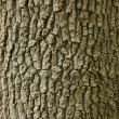 Stock Photo: Oak Tree Wallpaper