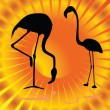 Flamingo on orange background vector illustration — Stock Vector #39344401