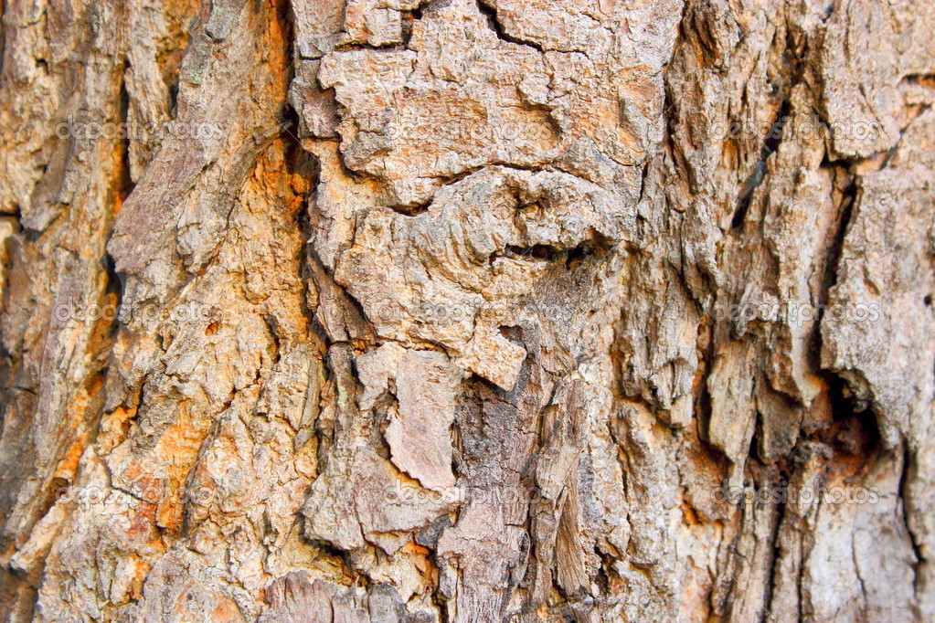 evergreen tree bark background - photo #23