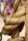 Rope in closeup — Stock Photo
