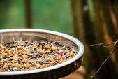 Bird food — Stock Photo