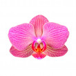 Pink orchid flower — Stock Photo #22773092
