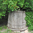 Old wooden well under viburnum — Stock Photo