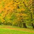 Beautiful tree in autumn park — Stockfoto