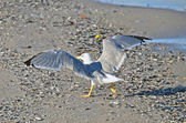 Seagull on shore — Stock Photo