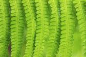 вися вниз листья папоротника — Стоковое фото