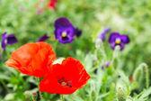Flores de color brillante con luz en el día de verano olnechny — Foto de Stock