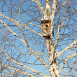 Nesting box on birch against the blue sky — Stock Photo