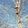 Nesting box on birch against the blue sky — Stock Photo #34552001
