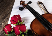 Violin, rose and music books — Stock Photo