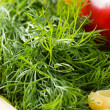 Close-up of dill leaves — Stock Photo