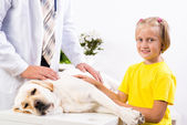 Girl holds a dog in a veterinary clinic — Stock Photo