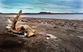 Extraterrestre en el lago — Foto de Stock