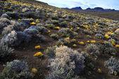 Patagonia landskap — Stockfoto