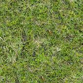 Gras textuur. — Stockfoto