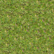 Stock Photo: Grass Texture.