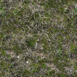 Grass Texture. — Stock Photo