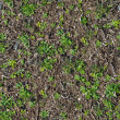 Soil with the Sprouted Grass Texture Seamless. — Photo