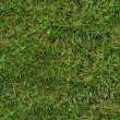 Green Grass. Seamless Texture. — Photo