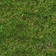 Green Grass. Seamless Texture. — Stockfoto #22583315