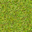Photo: Green Grass. Seamless Texture.