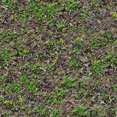 Grass Seamless Texture. — Stock Photo