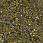 Mossy Wall Seamless Texture. — Stock Photo
