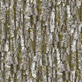 Bark. Seamless Texture. — Stock Photo