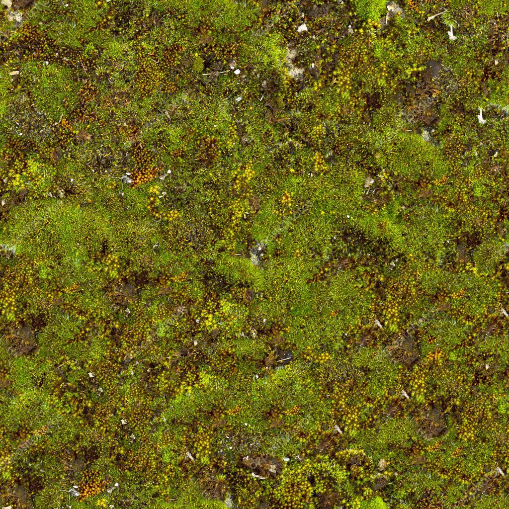 Moss Seamless Texture. — Stock Photo © tashatuvango #22588527