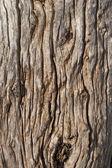 Old Wood Background. — Stock Photo