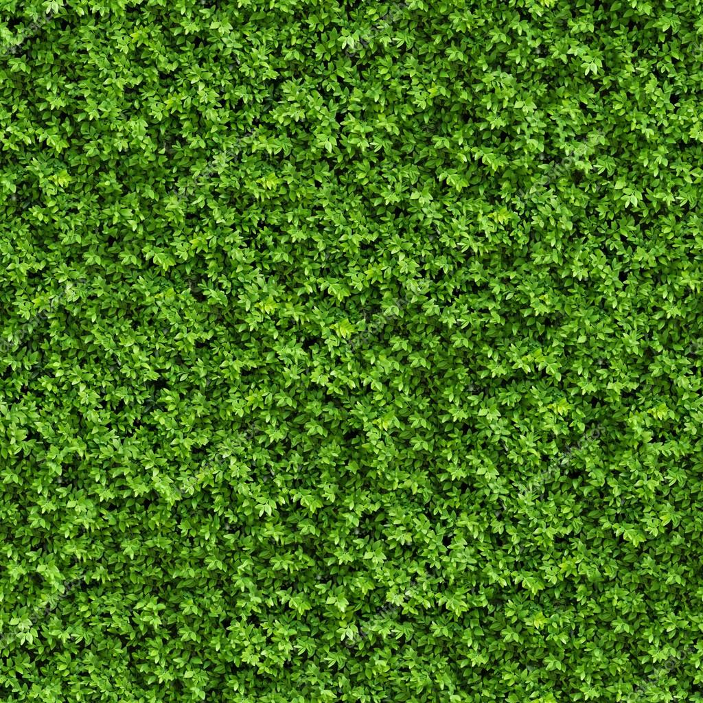 Green Bush. Seamless Texture. — Stock Photo © tashatuvango ...