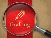 Grafting Concept: Magnifying Glass — Foto Stock