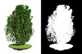 Isolated Green Bush with Detail Raster Mask. — Stock Photo