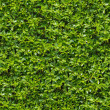 Stock Photo: Green Bush. Seamless Tileable Texture.