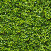 Green Bush. Seamless Tileable Texture. — Stock Photo