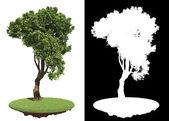Zakřivené Zelený strom izolovaných na bílém pozadí. — Stock fotografie