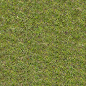 Green Meadow Grass. Seamless Tileable Texture. — Stock Photo