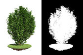 Green Bush with green grass on White Background. — Stock Photo