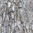 Wood texture - Zdjcie stockowe
